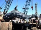 Exemplar de tubarão-baleia com sete toneladas é encontrado no Paquistão