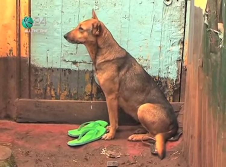 Planeta_Bicho_cachorro_adota_crianças_quênia2 (Foto: Reprodução/YouTube)