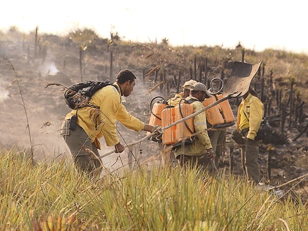 Cerca de cem brigadistas atuam no combate ao fogo (Foto: Reprodução/TV Globo)