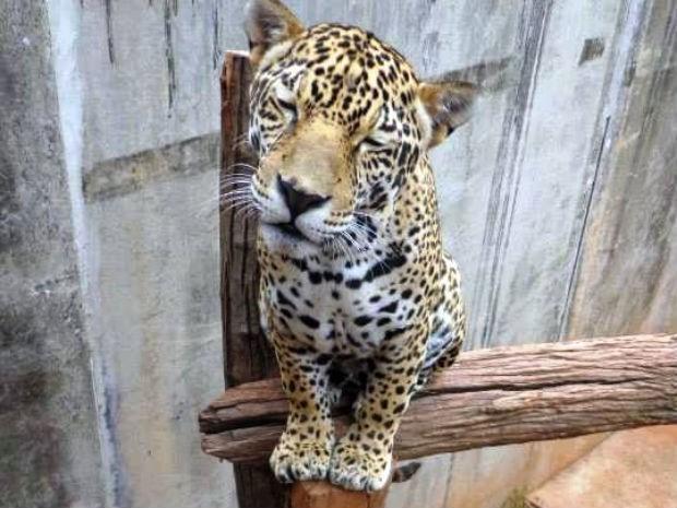 Mata Ciliar mantém centro para cuidar de animais silvestres em Jundiaí (Foto: Divulgação / ONG Mata Ciliar)