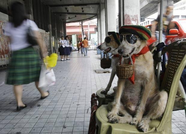 Dono colocou chapéu e óculos nos cães para chamar atenção. (Foto: Pat Roque/AP)