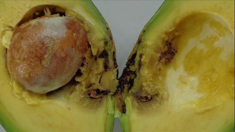 abacate (Foto: Reprodução/TV Globo)