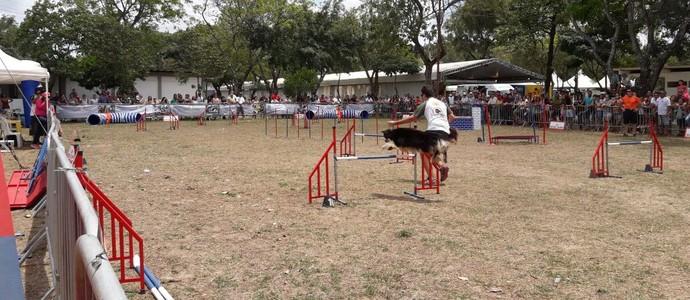 copa paraíba de agility (Foto: Divulgação)