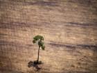 Imazon aponta alta de 467% no desmate da Amazônia em outubro