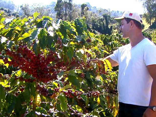 Produtores estão animados com a colheita antecipada (Foto: Eder Ribeiro/EPTV)