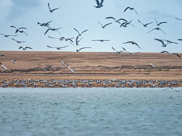 Pássaros no Rio Doce (Foto: Leonardo Merçon / Últimos refúgios)