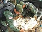 Batalhão apreende mais de 250 kg de pescado em feira do interior do AM