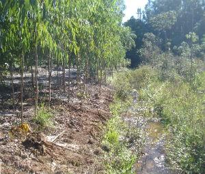 Segundo PMA, area desmatada é de 8 hectares (Foto: Divulgação/PMA)