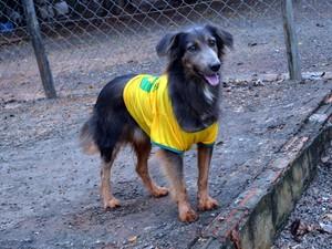 Sarampo, cachorro de ONG em Piracicaba (Foto: Thomaz Fernandes/G1)
