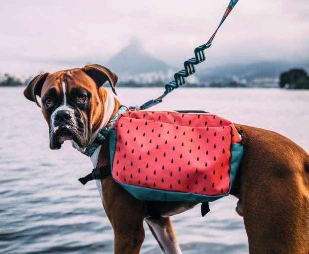 Mochila canina de poliamida, da Wöllner em parceria com a Zee.Dog, (Foto: Divulgação)