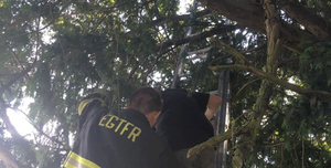 Americana fica presa em árvore em cemitério ao jogar Pokémon Go (Foto: East Greenwich Township Fire and Rescue/Facebook)