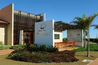 agricultura-cafe-ocoffee (Foto: Divulgação)