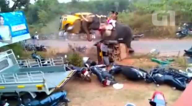 Elefante furioso atacou 27 veículos em festival na Índia (Foto: Reuters)