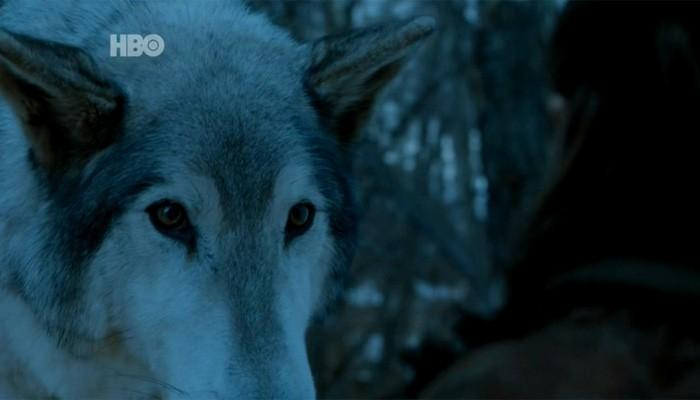 Fica a dúvida: será que era mesmo Nymeria em Game of Thrones? (Foto: Divulgação )