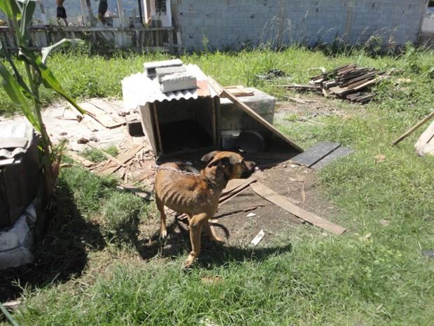 Cachorro com sinais de desnutrição (Foto: Divulgação/ONG OFA-PG)