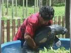 Filhote de peixe-boi é encontrado preso em rede de pesca, no AM