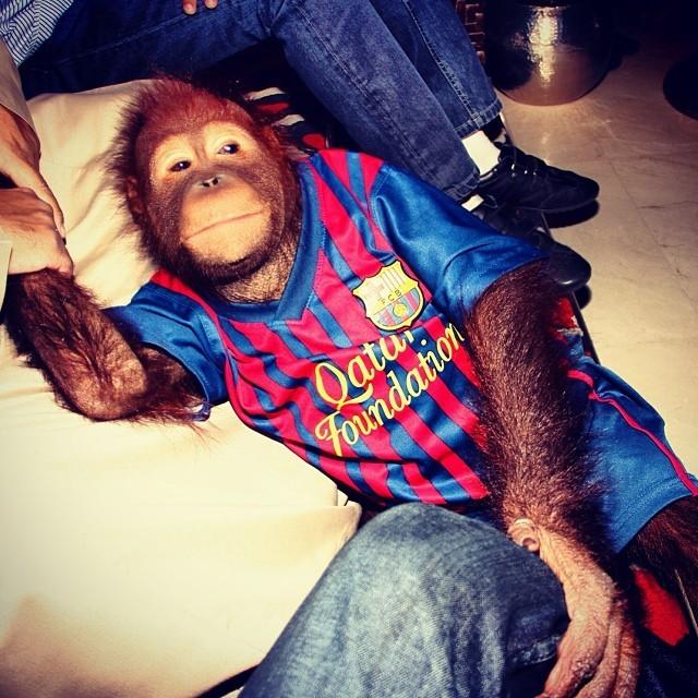 Paris Hilton postou foto de orangotango (Foto: Reprodução/Instagram)
