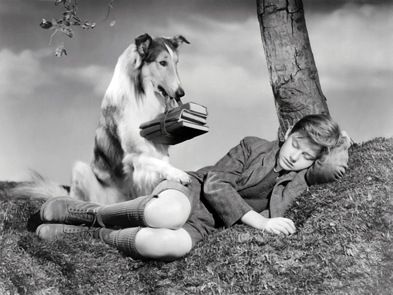 Lassie - A Força do Coração (1943) (Foto: Divulgação)