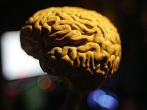 Cérebro (Foto: BBC)