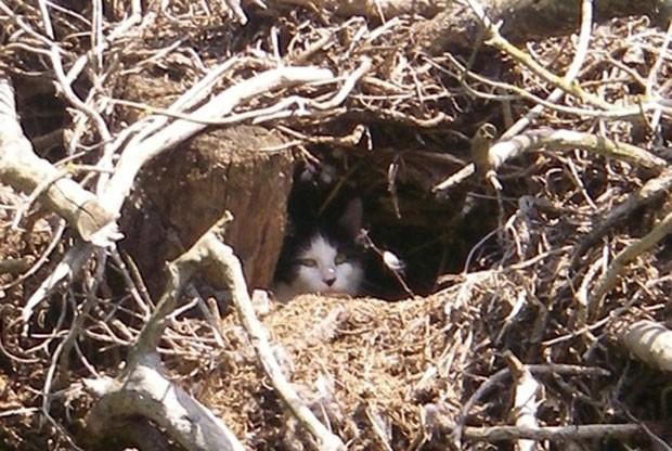 Gata foi resgatada de uma árvore em Littleover. (Foto: Reprodução/RSPCA)