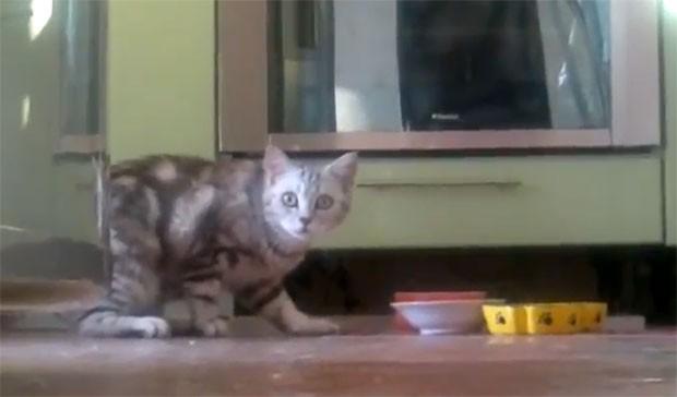 Gato parece se incomodar por ser filmado (Foto: Reprodução/Youtube)