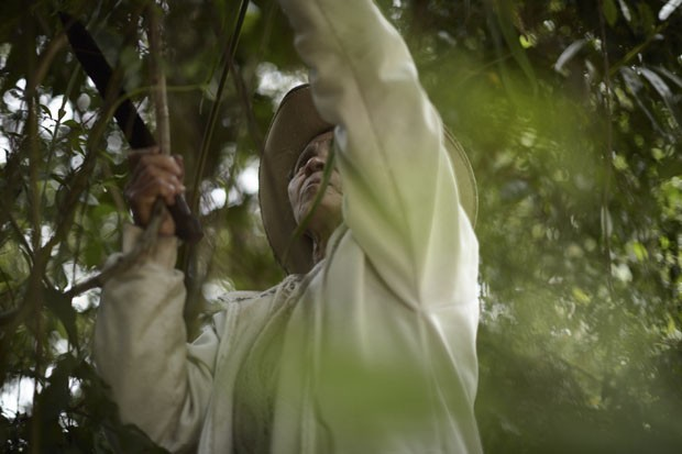 Cacilda coletando cipó, Quilombo do IvaporunduvaCRÉDITO OBRIGATÓRIO (Foto: © Luiz Cunha/ISA)