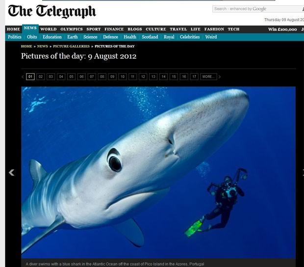 Mergulhador nadou ao lado de um tubarão-azul na costa da ilha do Pico. (Foto: Reprodução/Daily Telegraph)