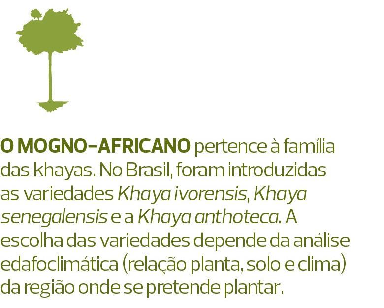 Mogno (Foto:  )