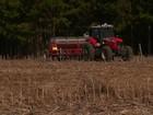 Está terminando o plantio da cevada no Paraná