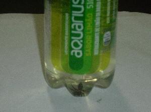 Consumidor encontra aranha dentro de garrafa de refrigerante (Foto: Arquivo Pessoal)