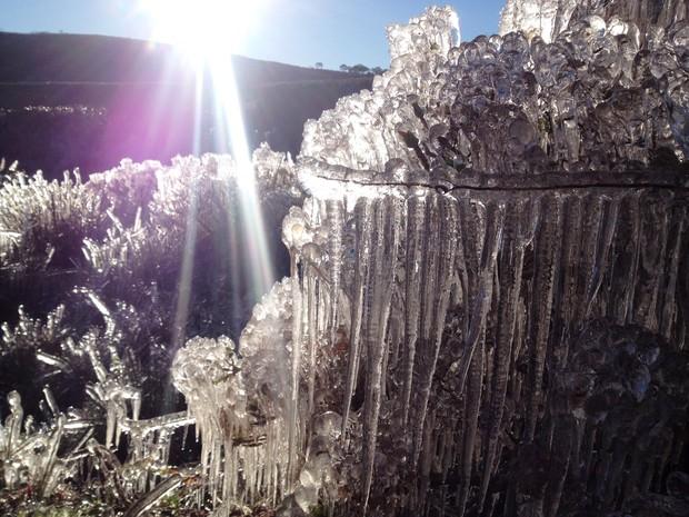 Vegetação congelou em Bom Jardim da Serra, que registrou -7,7ºC (Foto: Roberto Cascaes/Divulgação)