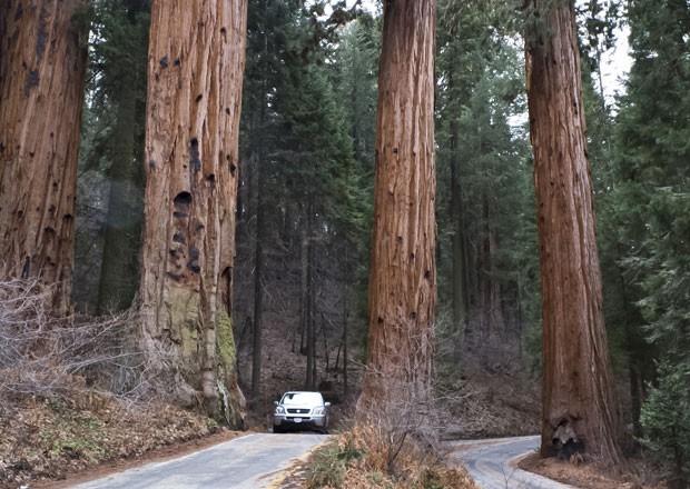 Www Cabresto Blogspot Com Parque Das Sequoias Gigantes