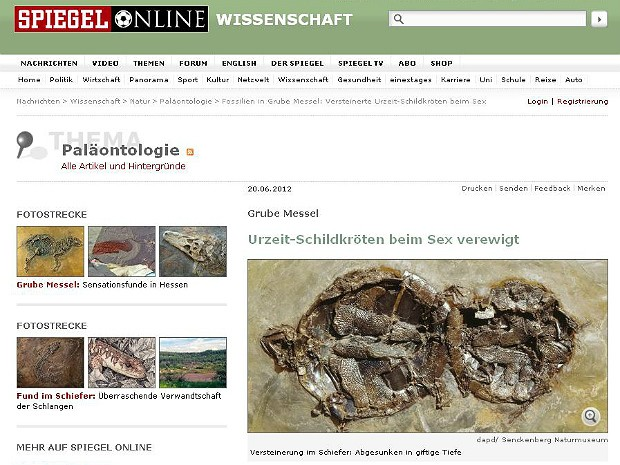 Fóssil tartaruga (Foto: Spiegel online/Reprodução)