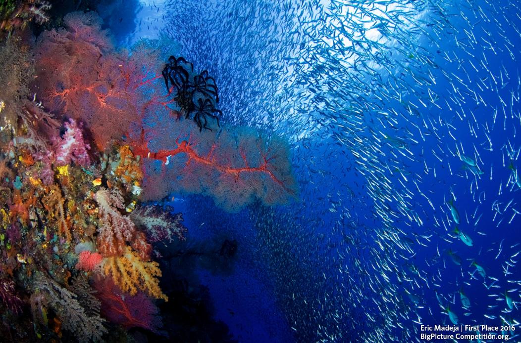 """Melhor ensaio - """"O Triângulo de Corais"""", fotografada pelo malaio Eric Madeja, na fronteira entre Indonésia, Malásia, Filipinas,  Papua Nova Guiné, Timor Leste e Ilhas Salomão (Foto: Eric Madeja)"""