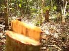 Atlas da Mata Atlântica revela dados do desmatamento em cidades de AL