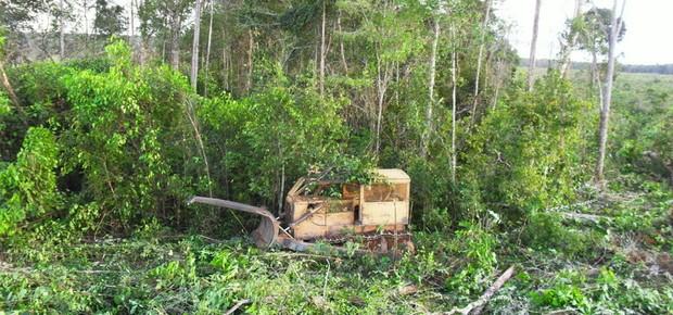 Desmatamento (Foto: Ibama)