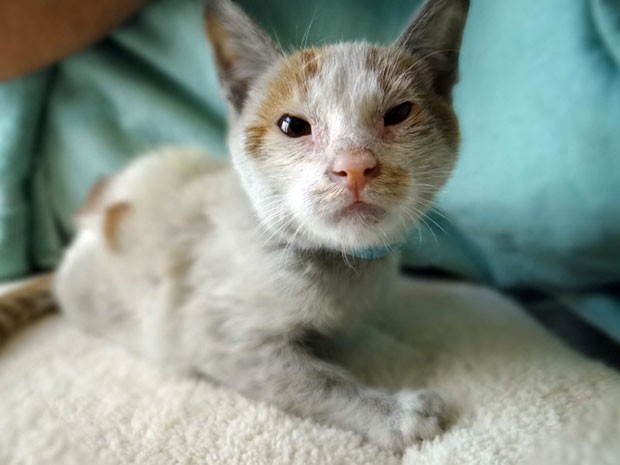 O gato Ni Hao (Foto: AFP)