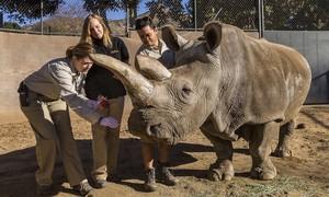 Rinoceronte branco raro morre nos Estados Unidos