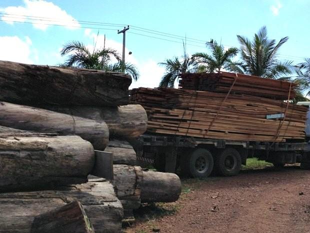 Foram apreendidos pela Sedam metros cúbicos de madeira de desmatamento ilegal (Foto: Larissa Matarésio/G1)