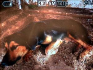 Policiais fotografaram resgate de cadela baleada em Cajuru, SP (Foto: Marina Sola/G1)