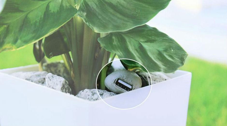 Sistema gera energia com a fotossíntese de plantas