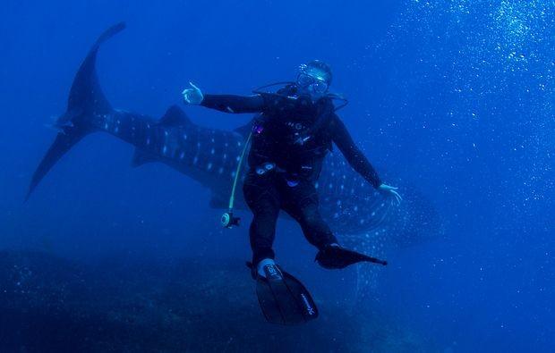 Mergulhadores posaram para fotos com o Tubarão-Baleia (Foto: Alexandre Ogusuku / Divulgação)