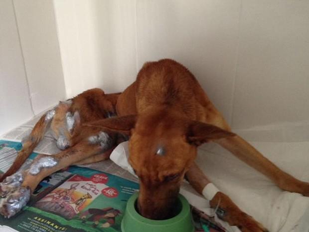 Cachorro maltratado em Uberlândia (Foto: Junior Garcia/Arquivo pessoal)