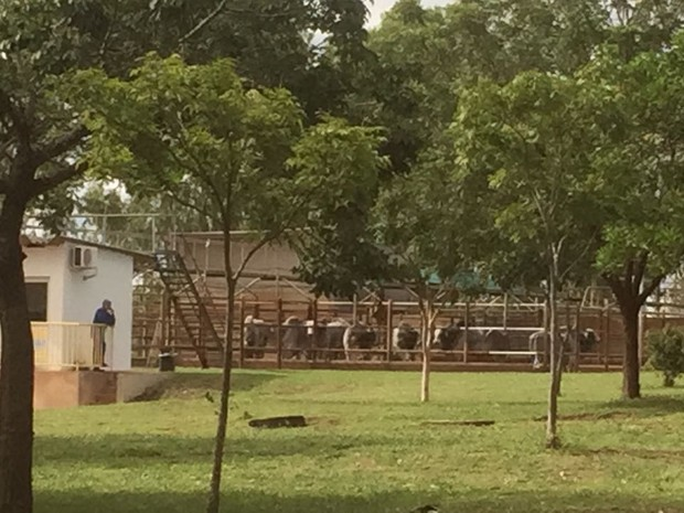 Frigorífico em Gurupi é autuado por compra de gado em áreas embargadas (Foto: Heitor Moreira/TV Anhanguera)