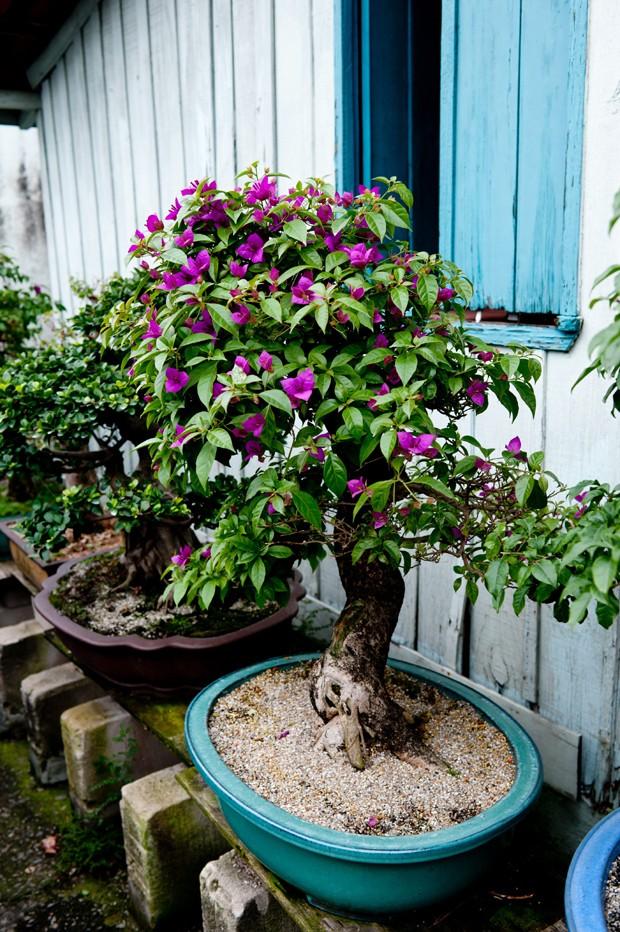 Bonsai como comprar cuidar cultivar regar casa e for Como cultivar bonsais