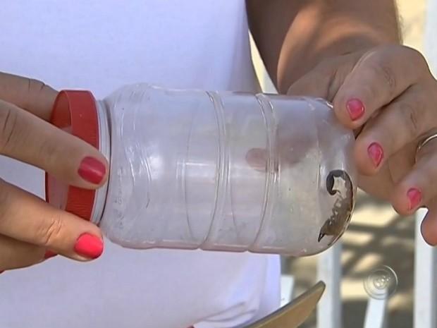 Em caso de picada, é preciso lavar área, capturar o bicho e procurar atendimento (Foto: Reprodução/ TV TEM)