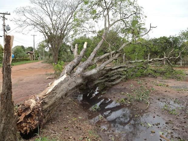 Nova Odessa teve 150 queda de árvores após as chuvas (Foto: Osnei Réstio)