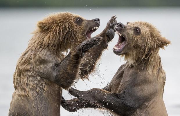 Segundo lugar  da categoria Melhor Imagem - Selvagem e Vibrante  (Foto: Marco Urso/www.tpoty.com)