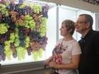 Vencedores da exposição de uvas são conhecidos em Caxias do Sul