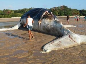 Animal já estava em estado de decomposição quando foi encontrado (Foto: Rosiane Jesus/Site Prado Notícia)